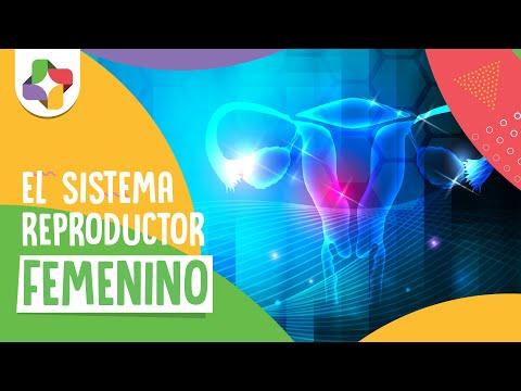 Sistema reproductor femenino Biología Educatina