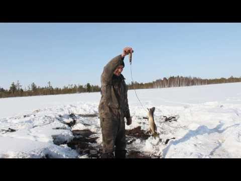охота равно рыбная ловля  съезд юрок