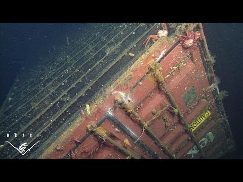 Lost at sea Ecological assessment around a sunken shipping container