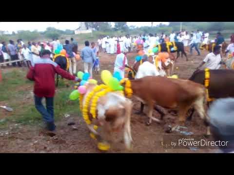 Xxx Mp4 My Village Mattu Pongal Festival Celebration 3gp Sex