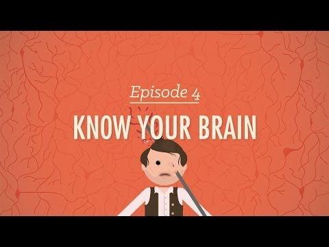Xxx Mp4 Meet Your Master Getting To Know Your Brain Crash Course Psychology 4 3gp Sex