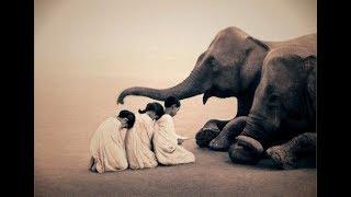 أغرب 5 علاقات بين الإنسان و الحيوان , لن تصدق أنها حدثت .. !!!