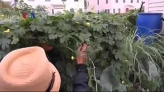 Warga Indonesia Bertani di Amerika - Liputan Feature VOA