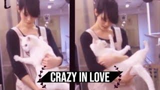 [NEKO TIME] crazy japanese cat loves his human -  池袋のねころび Cat Cafe