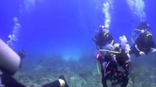 Shark Adventure - 1