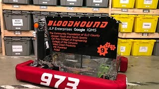 973 Bloodhound Reveal