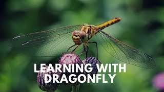 Learning With Dragonfly - Channel Education