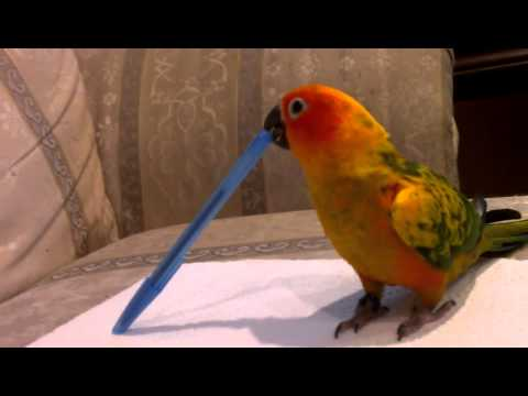 Sunny loves the pen!