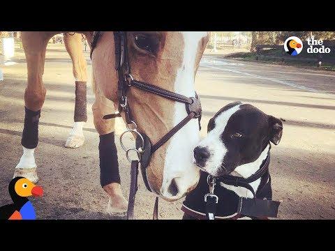 Xxx Mp4 Dog Thinks He S Actually A Horse The Dodo Odd Couples 3gp Sex