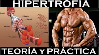 HIPERTROFIA. Teoría y práctica, conocimientos y rutina ejemplo.