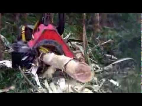 Log Max 6000 Eucalyptus