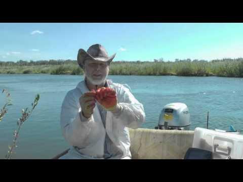 рыбалка в июне на цимле