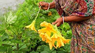 snacks recipe - Snacks recipes Indian - Indian recipes -very tasty pumpkin flower snacks recipe