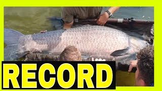 Fish Gozzilla Amur !70 🔥kg SKOI Amur 黑龙江  Record  monster fish by Vlad Parfene