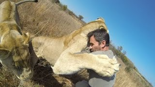 Lion Hug Compilation