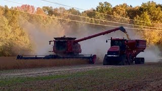 Ohio Soybean Harvest! Case Tractors And Combines! Harvesting Soybeans!