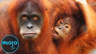 10 Animals That Are Almost Extinct