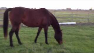 Horse Dominance - Mare in Heat - Gelding Dropping - Knowing the Difference - Rick Gore Horsemanship