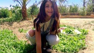 رحلة ليلى عمر الفاروق لـ #الفيوم - #اعرف_بلدك
