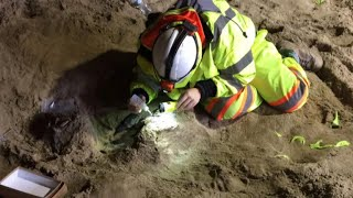 Bones of giant sloth discovered in Los Angeles