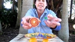 Red Orange Trees: Arnold Blood DaleysFruit.com.au