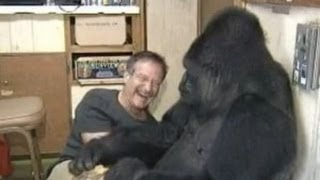 Koko the Gorilla meets Robin Williams