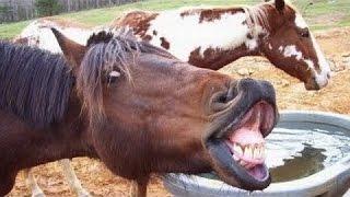 Dyr Skrige Og Gøre Sjove Lyde - Funny Dyr Lyd Kompilering Del 2