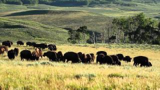 Bear Mountain Bison: Exceptional Taste from an Extraordinary Place