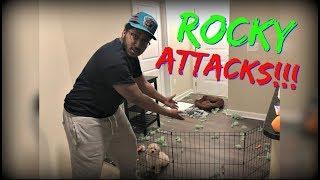 MINI VLOG : PUPPY PROBLEMS | ROCKY DESTROYS THIS!!