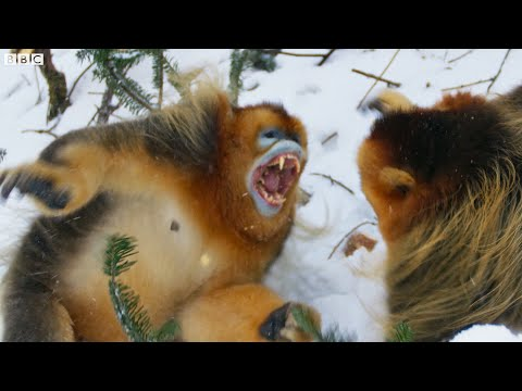 From Cute to Terrifying in Under 60 Seconds Seven Worlds One Planet BBC Earth