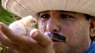 Agapito Diaz y el pollito - JR INN
