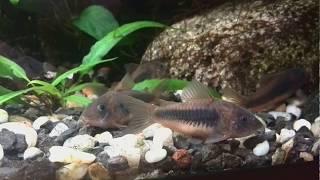 Relax with the aquarium at mezzo tv