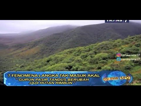 PADANG PASIR BERUBAH MENJADI HUTAN LEBAT ~ Fenomena Langka