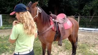 Cavalo que Pula quando Monta