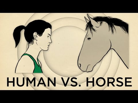 Human Vs. Horse Marathon  | Field Trip! | SKUNK BEAR