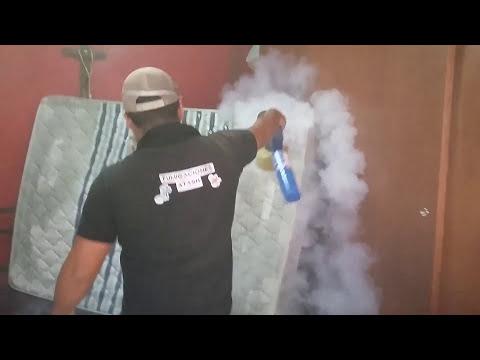 Como eliminar chinches de cama fumigaciones atash for Como eliminar chinches de cama