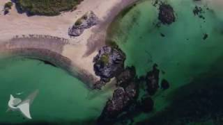 Sea Wild Scotland Drone Showreel