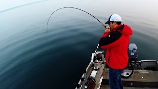 Salmon & Lake Trout Jigging Technique