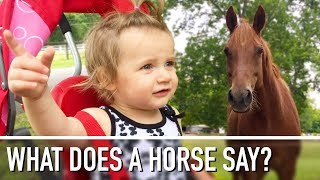 FIRST TIME MEETING A HORSE