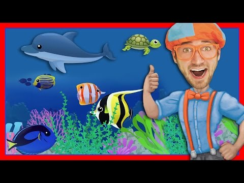 Xxx Mp4 Story Time With Blippi Treasure Chest 3gp Sex