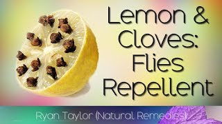 How To Get Rid of Flies Quickly (with Lemon and Cloves)