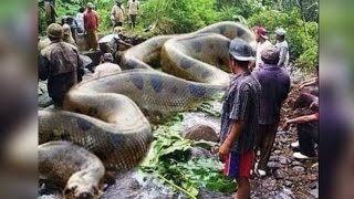 Top 10 World's Biggest Snake found on Earth
