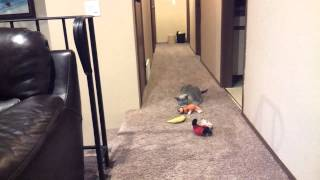 Sad cat cries when her humans leave
