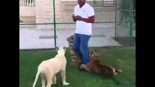Fuck lions اسود محترفة