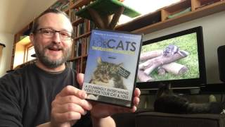KITTYCAT PARADE GREATEST HITS: Kitty Video Review, part 1