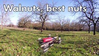 Walnuts best nuts