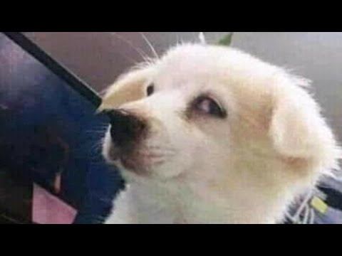 memes that i watch while my dog stares at me