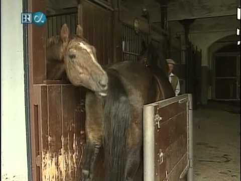 Horse semen collection, insemination. Besamung Pferde