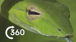 Costa Rican Jungle 360° - Planet Earth II