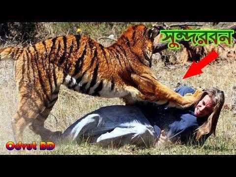 Xxx Mp4 পৃথিবীর সবচেয়ে ভয়ংকর জঙ্গল হলো সুন্দরবন।। The Most Dangerous Jungle In The World Is The Sundarbans 3gp Sex